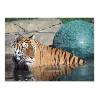 "Bengal Tiger Customizable Announcement 5"" X 7"" Invitation Card"