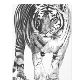 Bengal Tiger Drawing Letterhead