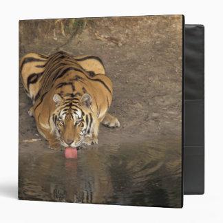 Bengal Tiger drinking Panthera tigris) 3 Ring Binder