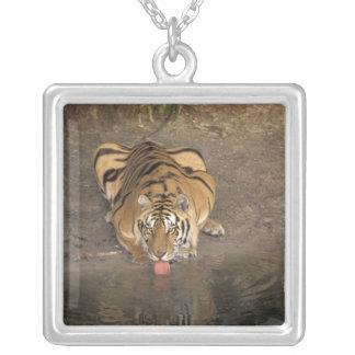 Bengal Tiger drinking Panthera tigris) Square Pendant Necklace