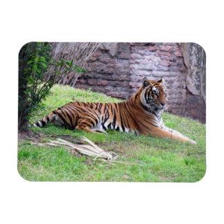 Bengal Tiger Flexible Magnet
