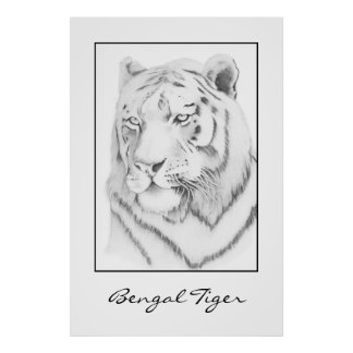 Bengal Tiger Graphite Drawing Poster