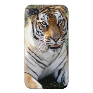 Bengal Tiger i iPhone 4/4S Case