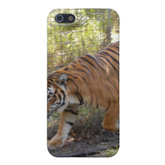 Bengal Tiger i iPhone 5/5S Cover