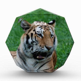 Bengal Tiger in India Acrylic Award