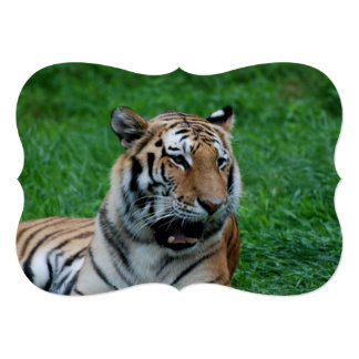 Bengal Tiger in India Card