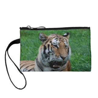 Bengal Tiger in India Coin Wallet