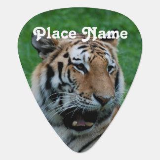 Bengal Tiger in India Guitar Pick