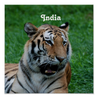 Bengal Tiger in India Poster