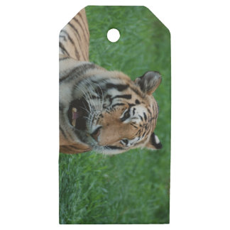 Bengal Tiger in India Wooden Gift Tags