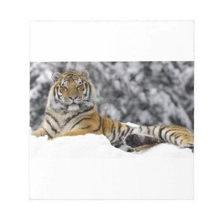 Bengal Tiger In The Snow Memo Pads