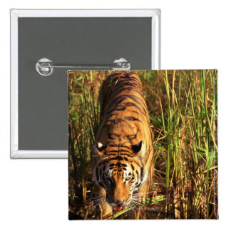 Bengal tiger in wetlands pinback button