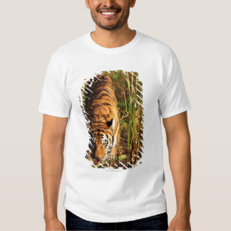 Bengal tiger in wetlands T-Shirt