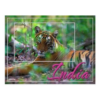 Bengal tiger, India Postcard