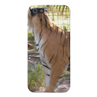 Bengal Tiger iPhone Case Covers For iPhone 5