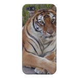Bengal Tiger iPhone Case iPhone 5 Cover