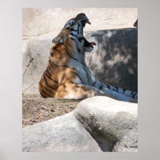 Bengal Tiger Love Poster