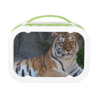 Bengal Tiger Lunch Box