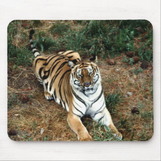 Bengal tiger mouse pad