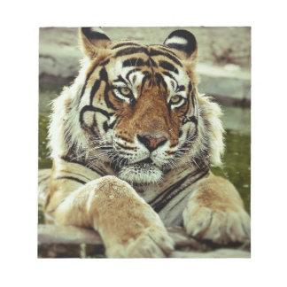 Bengal Tiger Notepads
