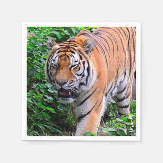Bengal Tiger on the Prowl (party napkin) Paper Napkin