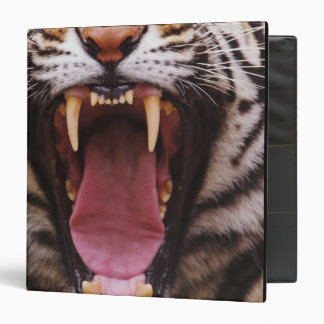 Bengal Tiger, Panthera tigris 2 Binders