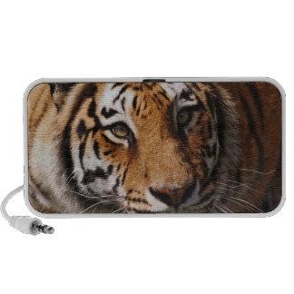 Bengal Tiger, Panthera tigris 3 Speakers