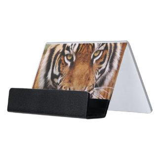 Bengal Tiger, Panthera tigris Desk Business Card Holder