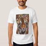 Bengal Tiger, Panthera tigris Dresses