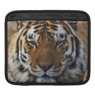 Bengal Tiger, Panthera tigris, Louisville Zoo, Sleeves For iPads