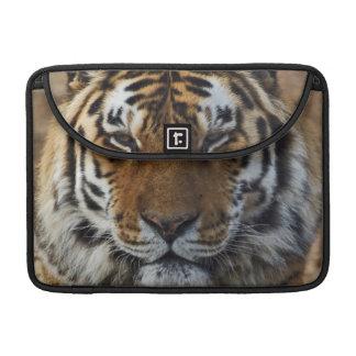 Bengal Tiger, Panthera tigris, Louisville Zoo, Sleeves For MacBook Pro