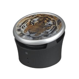 Bengal Tiger, Panthera tigris, Louisville Zoo, Speaker