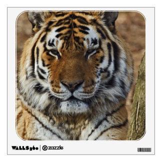 Bengal Tiger, Panthera tigris, Louisville Zoo, Wall Decal