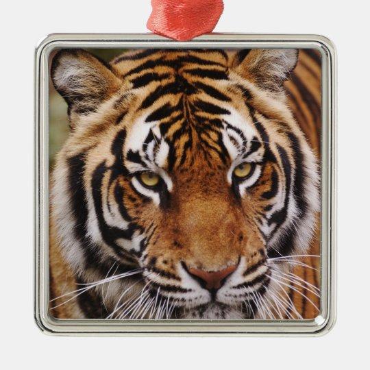 Bengal Tiger, Panthera tigris Metal Ornament