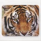 Bengal Tiger, Panthera tigris Mouse Pad
