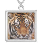 Bengal Tiger, Panthera tigris Square Pendant Necklace