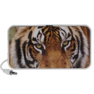 Bengal Tiger, Panthera tigris Portable Speaker