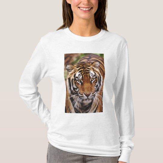 Bengal Tiger, Panthera tigris T-Shirt