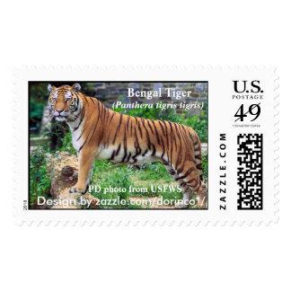 Bengal Tiger (Panthera tigris tigris) 2 Postage Stamps