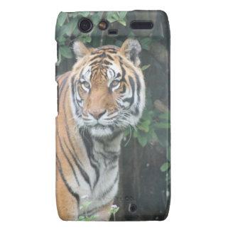Bengal tiger (Panthera tigris tigris) Droid RAZR Covers
