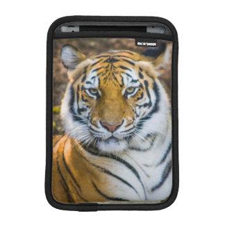 Bengal Tiger (Panthera Tigris Tigris) Sleeve For iPad Mini