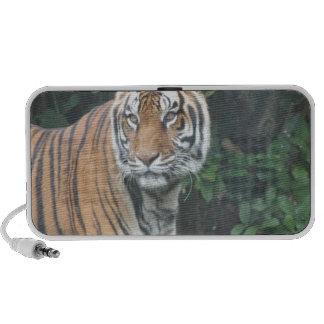 Bengal tiger (Panthera tigris tigris) iPod Speakers