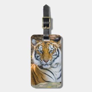 Bengal Tiger (Panthera Tigris Tigris) Tag For Luggage