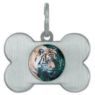Bengal Tiger Pet Tag