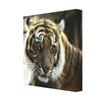 Bengal Tiger Photo Canvas Print