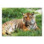 Bengal Tiger Photograph Card