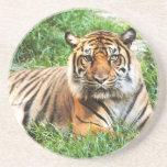 Bengal Tiger Photograph Coaster