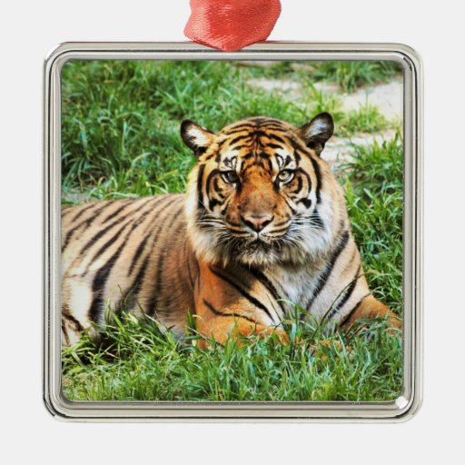 Bengal Tiger Photograph Ornament
