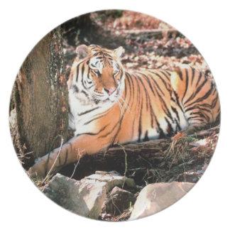 Bengal Tiger Photograph Plate