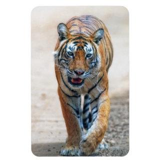 Bengal tiger rectangular photo magnet